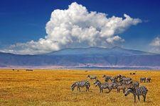 AB-Benny-Rebel-Fotoreise-Tansania-Zebra