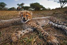 AHA-Benny-Rebel-Fotoreise-Suedafrika-Gepard