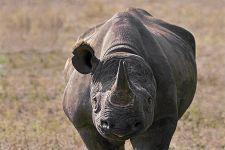 AID-Benny-Rebel-Fotoreise-Suedafrika-Nashorn-Spitzmaul