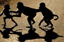 AJ-Benny-Rebel-Fotoreise-Suedafrika-Pavian