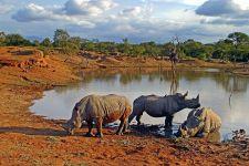 AK-Benny-Rebel-Fotoreise-Suedafrika-Breitmaul-Nashorn