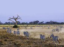 AM-Benny-Rebel-Fotoreise-Kenia-Zebra