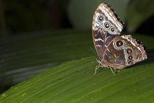 AN-Benny-Rebel-Fotoworkshop-Schmetterling-Costa-Rica