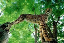 AU-Benny-Rebel-Fotoreise-Namibia-Gepard