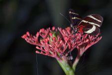 BTA-Benny-Rebel-Fotoworkshop-Costa-Rica-Schmetterling