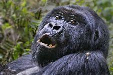 CAJ-Benny-Rebel-Fotoreise-Berg-GorillaRuanda