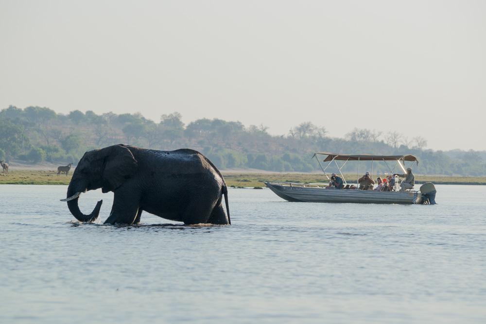 Fotoreise durch Botswana und Vic Falls (Simbabwe)