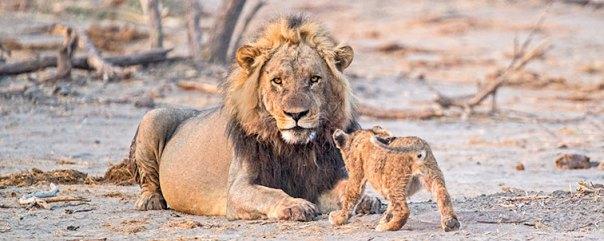 Fotoreise-Fotosafari-Botswana-Simbabwe-Afrika-010