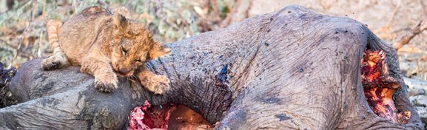 Fotoreise-Fotosafari-Botswana-Simbabwe-Afrika-011