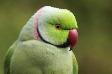 TDCR-Benny-Rebel-Fotoworkshop-Vogelfotografie