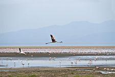 TKC-Benny-Rebel-Fotoreise-Tansania-Flamingo