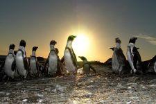 UGF-Benny-Rebel-Fotoworkshop-Suedafrika-Brillenpinguin