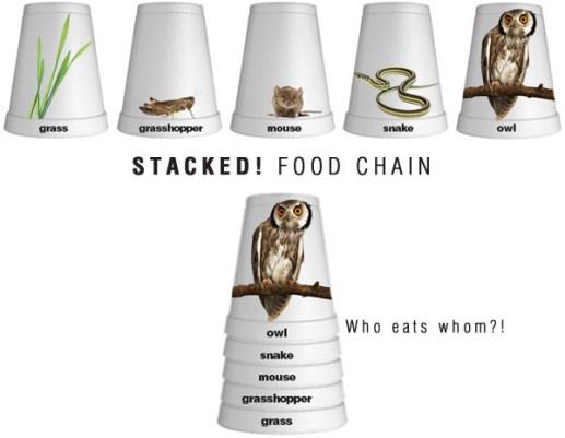 food-chain6