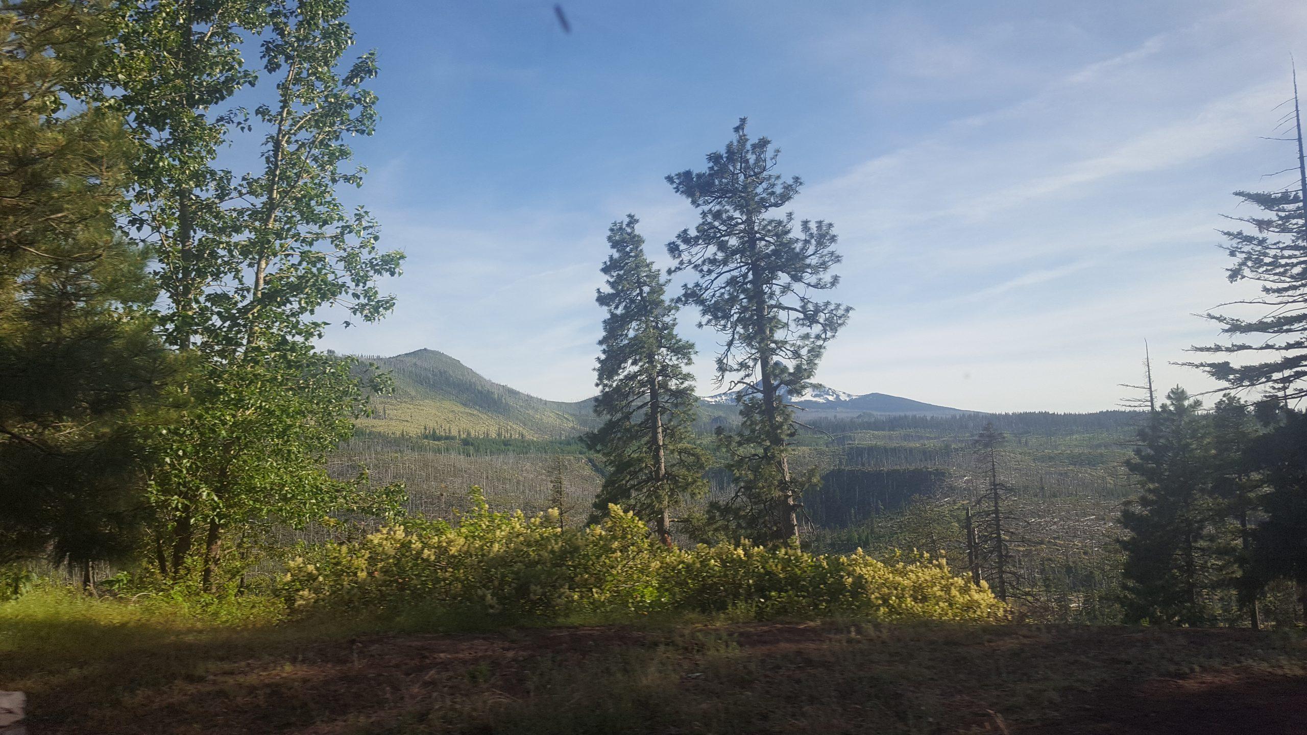 Sunny Oregon landscape