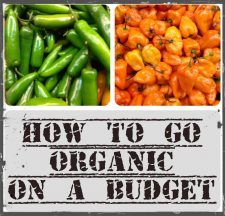 Learn how to go Organic on a Budget