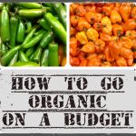organic on a budget, Be OrganicallYou