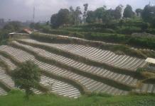 Petani Desa