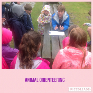 AT Animal Orienteering