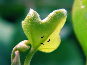 A picture of a plant with a sad face super-imposed onto it.