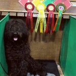 Alfie with his prizes