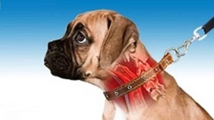 Risultato immagini per collari a strozzo per cani