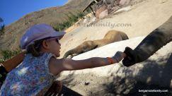 canaries - bergamote family - oasis park - éléphant