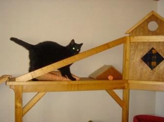 chaterie de la pension pour chat à Héric