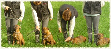 Education chiens Héric 44810
