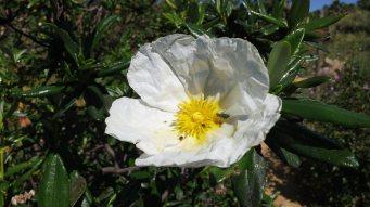 Wanderwoche-Algarve-5