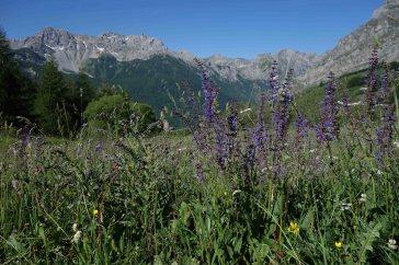 Wanderwoche Valle Maira / Blumenwiese