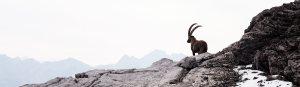 Im Einklang mit der Natur | Outdoor-Aktivitäten | Wandern | Trekking | Bergland Appartements in Lech am Arlberg | Sommer-Frische auf 1600m in Lech am Arlberg