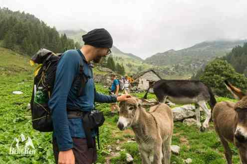 GTA Wandern Grande Traversata delle Alpi