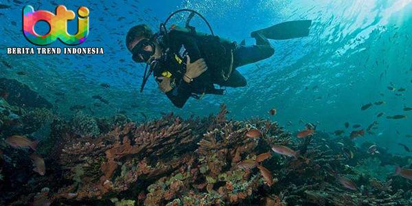 Beberapa Tempat Di Raja Ampat Untuk Belajar Menyelam