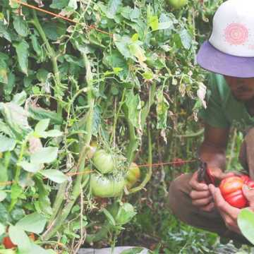 Alumna's documentary supports local food