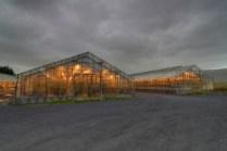 iceland banana production