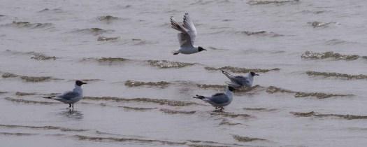 Vissende vogels © Inge