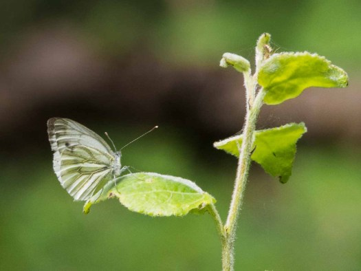 Als een vlinder wil ik ... © Inge