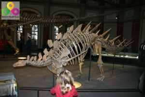Kinderführungen im Naturkunde Museum