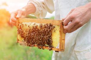 Bioland-Berufsimkerei Lahres (Führungen mit Honigverkostung, Hofladen)