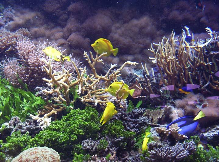 Bild AquaDom - Sea Live