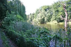 Bild-Moewesee-Volkspark-Rehberge