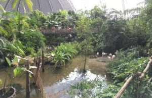Bild Regenwald Tropical Island