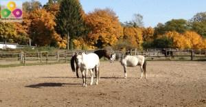 Ponyhof Neuholland in Liebenwalde OT Neuholland