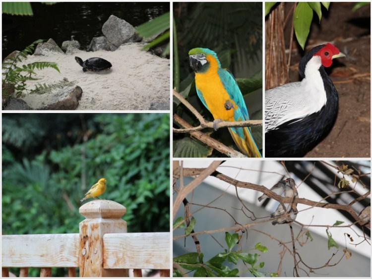 Tropical Islands: Guck mal, Tiere!