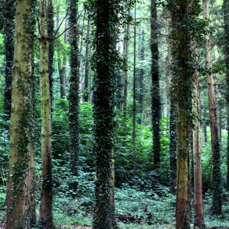 Märchenwald gucken bei Nieselregen kann auch entspannen.