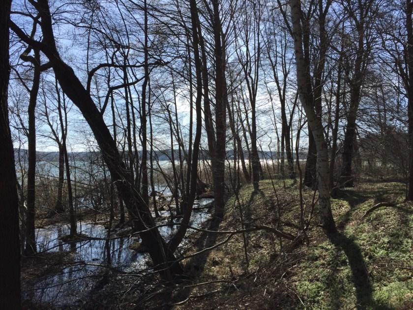 Das wilde Ufer des Scharmützelsees.