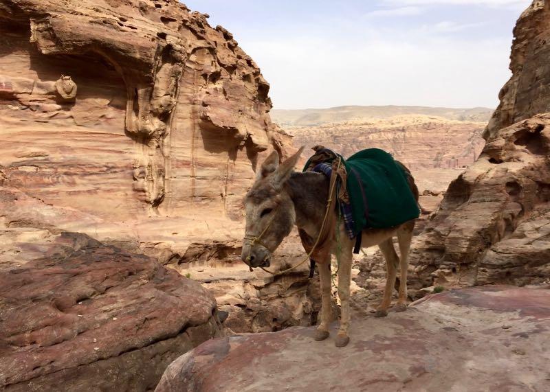 Petra mit Kindern: Bitte nicht auf den Eseln reiten