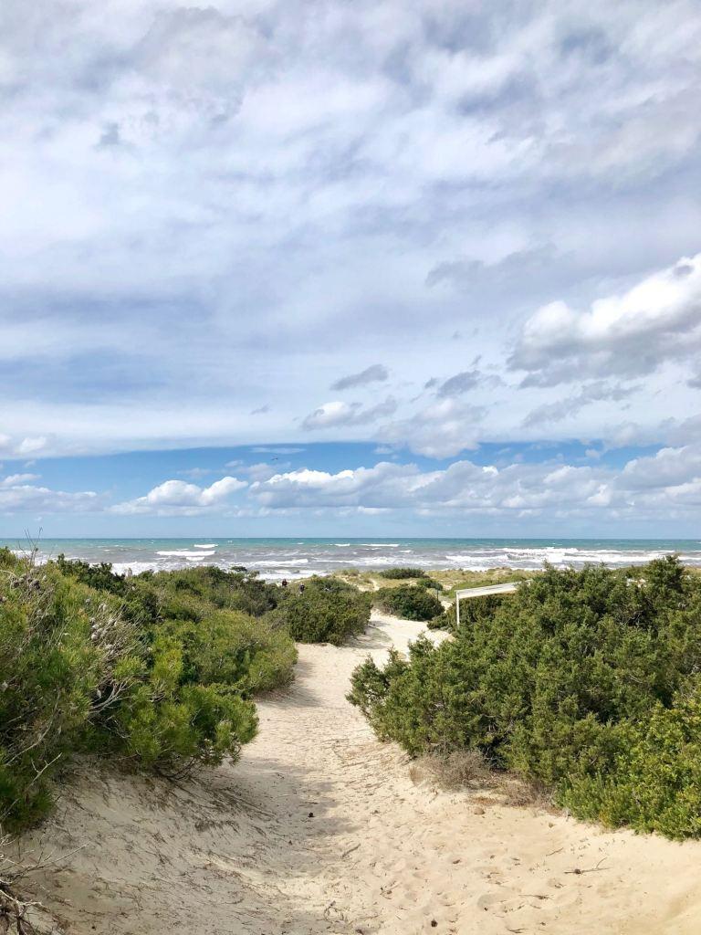"""Am Strand """"Playa Es Trenc"""": Einer der schönsten Naturstrände auf Mallorca"""