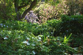 Üppig blühende Gehölze wie Magnolien und Rhododendren
