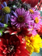 Astern, Dahlien, Sonnenblumen